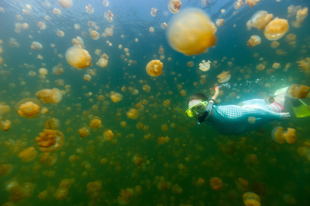 subspecies: Underwater photo of tourist woman snorkeling with endemic golden jellyfish in lake at Palau. Snorkeling in Jellyfish Lake is a popular activity for tourists to Palau. Stock Photo