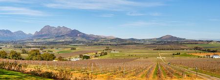 land plant: View across vineyards landscape with mountain backdrop in Cape Town South Africa