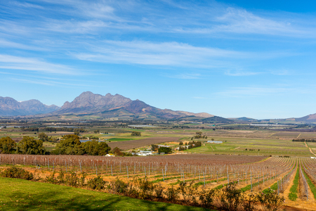 bodegas: View across vineyards landscape with mountain backdrop in Cape Town South Africa