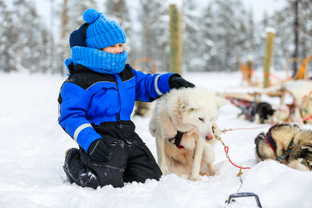 cuddle: Adorable little girl having a cuddle with husky sled dog in Lapland Finland