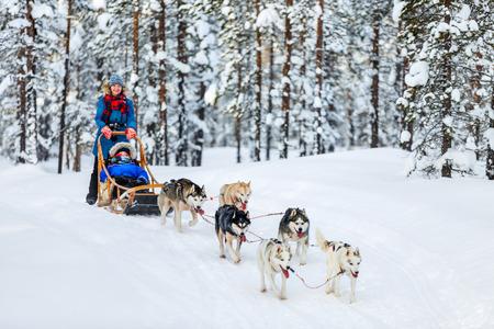 거친 개가 라플란드 핀란드의 겨울 숲에서 가족과 함께 썰매를 끌고있다. 스톡 콘텐츠