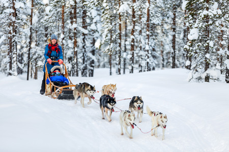Husky dogs are pulling sledge with family at winter forest in Lapland Finland Zdjęcie Seryjne - 63985627