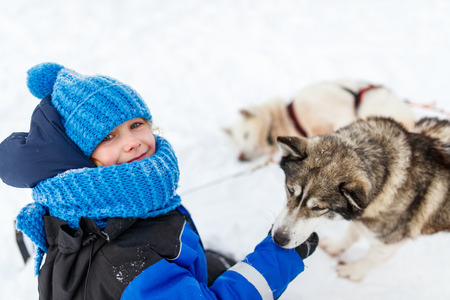 sled dog: Adorable little girl having a cuddle with husky sled dog in Lapland Finland