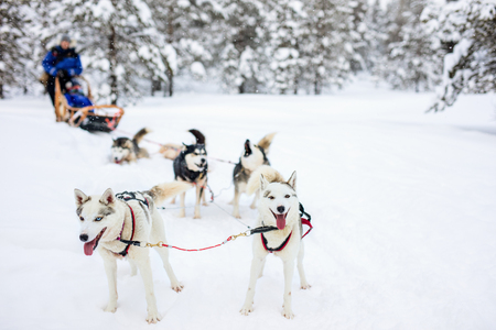 Sledding with husky dogs in Lapland Finland Stok Fotoğraf - 63986476