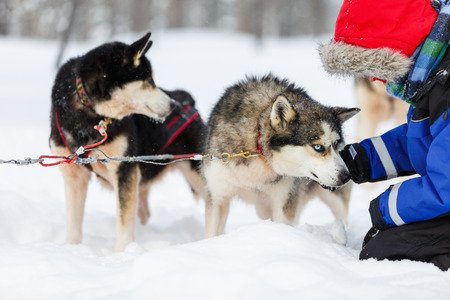Boy having a cuddle with husky sled dog in Lapland Finland Stock Photo