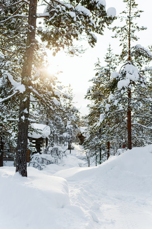 covered in snow: Beautiful winter landscape with wooden hut and snow covered trees Stock Photo