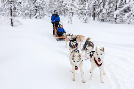 Schlitteln mit Huskys in Lappland Finnland