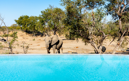 Pool view on luxury safari with elephants roaming around