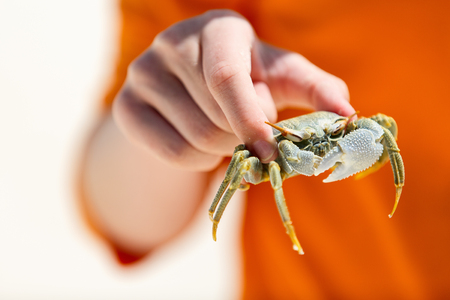 children crab: Close up of boy holding crab at beach Stock Photo