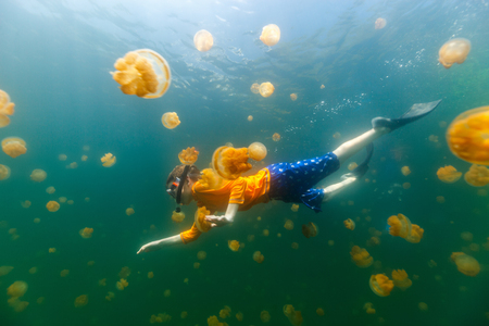 subspecies: Underwater photo of child diving with endemic stingless jellyfish in lake at Palau. Snorkeling in Jellyfish Lake is a popular activity for tourists to Palau. Stock Photo