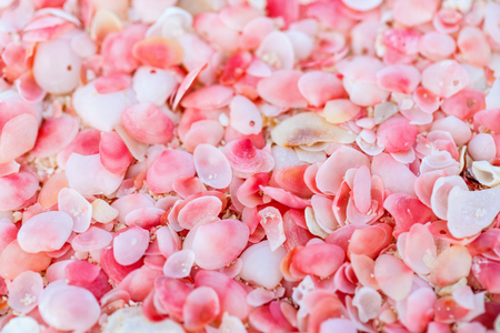 Pink sand beach on Barbuda island in Caribbean made of tiny pink shells, close up photo Stock Photo