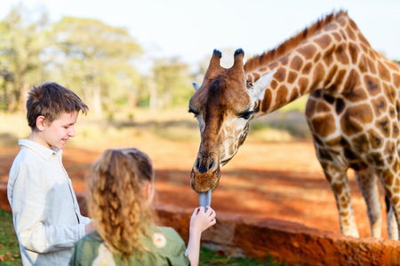 Kids brother and sister feeding giraffes in Africa