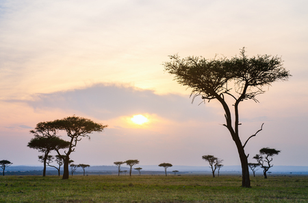 Beautiful landscape of Masai Mara at sunset