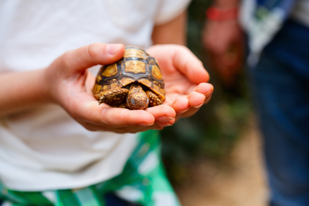 Close up of little girl holding baby tortoise