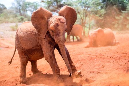 Sluit omhoog van babyolifanten die mudbath hebben Stockfoto