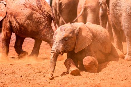 Close up of elephants in safari park enjoying mudbath
