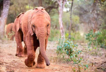 Close-up van olifant in safari park Stockfoto