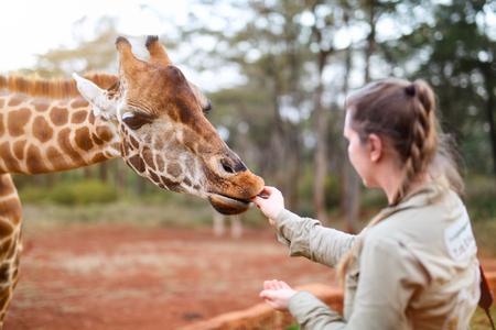 Jeune femme nourrissant girafe en Afrique Banque d'images - 85170593