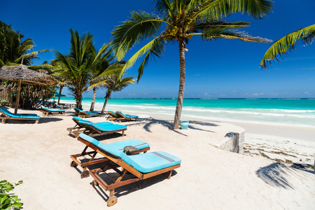 完璧な熱帯海岸のヤシの木の間のビーチベッド