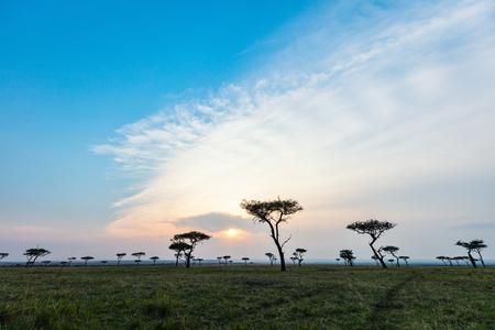 Beautiful landscape of Masai Mara at sunset