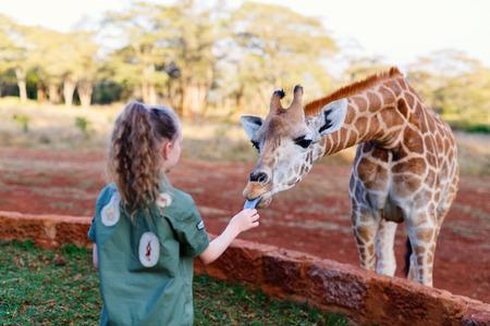 Menina pequena que alimenta girafas na África Foto de archivo - 89192860