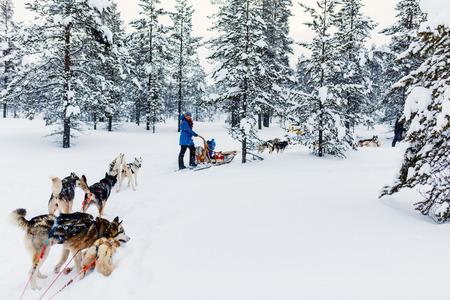 라플란드 핀란드의 거친 개로 썰매 타기