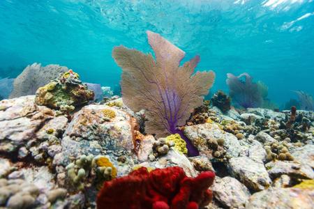 almeja: Beautiful colorful coral reef in Caribbean Foto de archivo