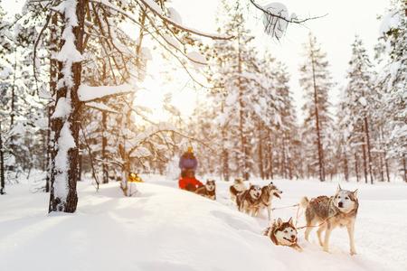 Rodelen met husky honden in Lapland, Finland Stockfoto