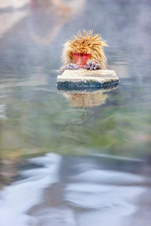 雪猿ニホンザル長野県で温泉に入浴します。 写真素材