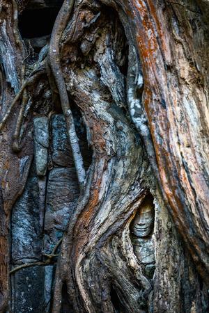 캄보디아 앙코르 고고학 지역의 나무 뿌리에 숨겨진 고대 석상
