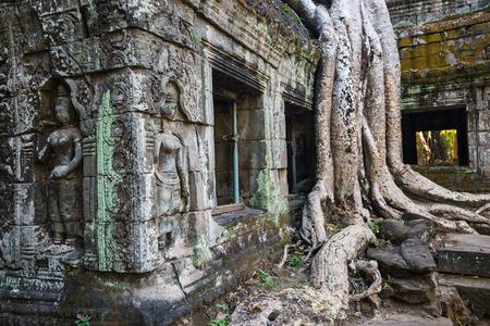 캄보디아 앙코르 고고학 지역의 따 프롬 사원 정글