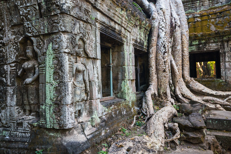 Ta Prohm jungle temple in Angkor Archaeological area in Cambodia