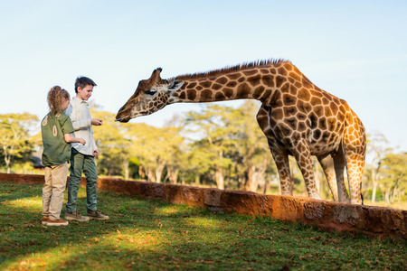 Kids brother and sister feeding giraffes in Africa Stock Photo - 90313332