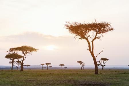 夕暮れ時のマサイマラ国立保護区の美しい風景