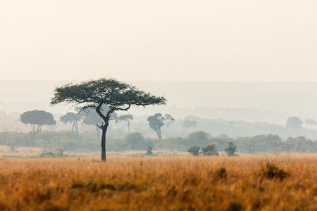 Beautiful landscape of Masai Mara at sunset or sunrise Stock fotó