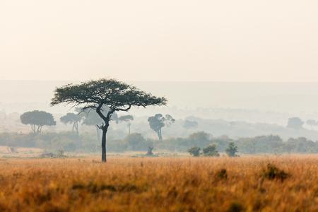 Mooi landschap van Masai Mara bij zonsondergang of zonsopgang
