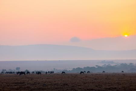 ヌー早朝ケニア マサイマラ国立保護区 写真素材