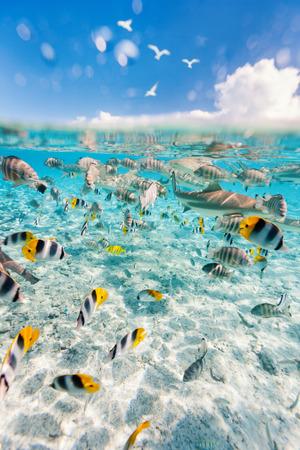 Kleurrijke vissen, pijlstaartrog en zwart getipte haaien onderwater in Bora Bora-lagune