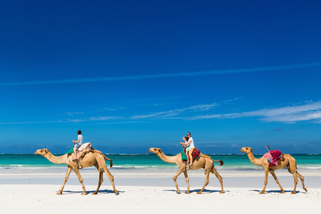 Family mother and kids riding camels at  tropical white sand beach 版權商用圖片