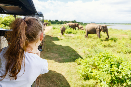Back view of adorable little girl on safari in Sri Lanka observing elephants from open vehicle Stock Photo
