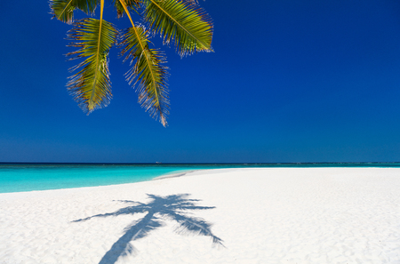 Perfect tropical white sand beach with coconut palm Reklamní fotografie