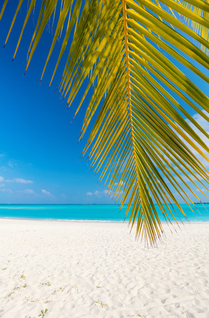 Perfect tropical white sand beach with coconut palm Standard-Bild