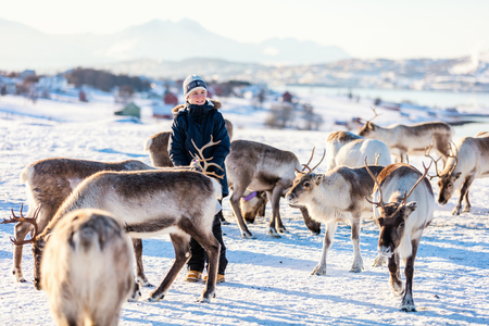 Teenage boy surrounded by many reindeer on sunny winter day in Northern Norway