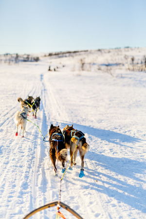 Sledding with husky dogs in Northern Norway