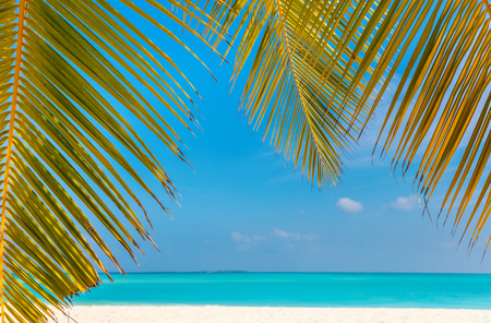 Perfect tropical white sand beach with coconut palm Stok Fotoğraf