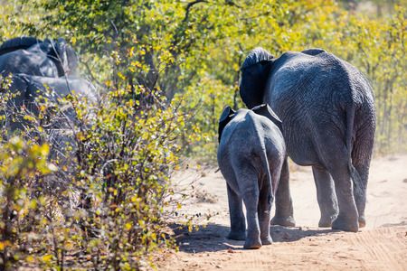 Close up of elephants in safari park