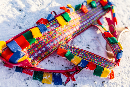 Close up of colorful reindeer rig belt used for pulling sledge