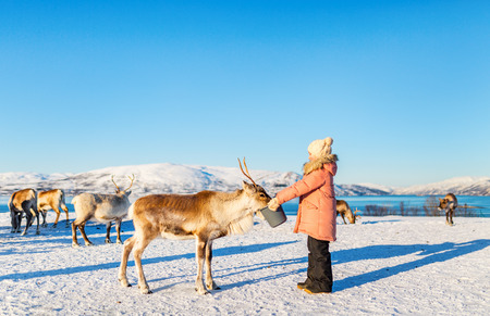 Little girl feeding reindeer on sunny winter day in Northern Norway Banco de Imagens