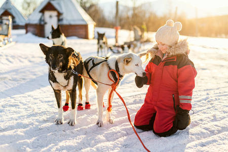 Adorable girl having a cuddle with husky sled dog in a farm in Northern Norway Stockfoto