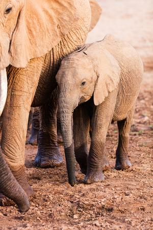 サファリパークで象をクローズアップ
